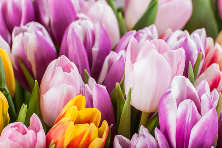 solemnity: Soft floral background with tulips, selective focus Stock Photo