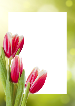 solemnity: Postcard with beautiful flowers, place for your congratulation Stock Photo