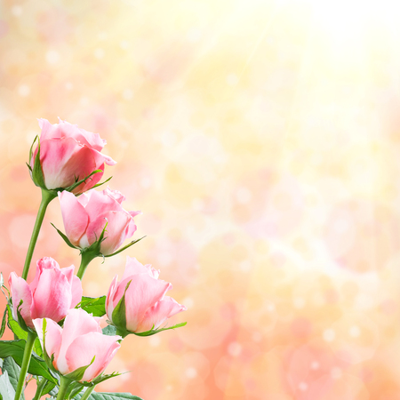Holiday nature background with beautiful flowers, floral border Фото со стока