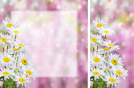 chamomile flower: Flower postcard with chamomile, empty place for your text, floral background, double sided cardboard