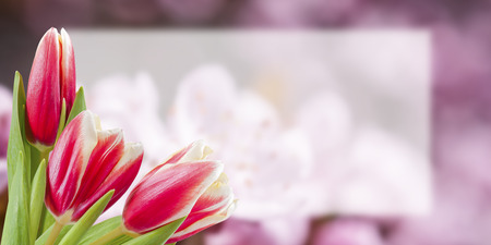 Flower postcard with tulip, empty place for your text, floral background Stock Photo
