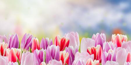 valentine day: Floral nature background, flower border, holiday postcard