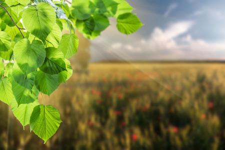 Zomer aard achtergrond met groene tak en veld