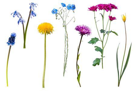 Flores silvestres, isoladas no fundo branco Foto de archivo