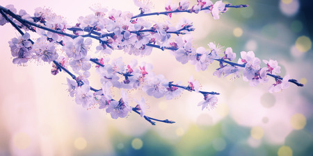 Blooming branch with spring flowers, vintage nature background