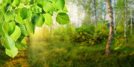 green meadow: Spring background with forest and green branch, selective focus Stock Photo