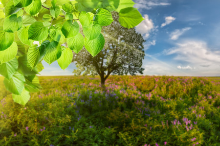 green wallpaper: Spring background with tree on meadow and green branch, selective focus