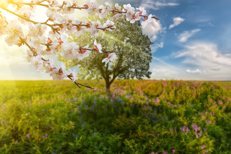 Spring background with tree on meadow and blooming branch, selective focus