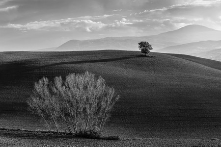 bw: BW landscape with big and small trees on agricultural field