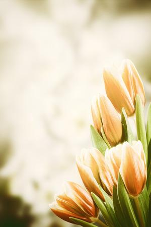 valentine border: Vintage postcard with tulip flowers, floral border Stock Photo