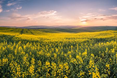 背景を農業、農業分野での春の風景