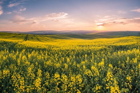 Spring landscape with agricultural fields, farming background