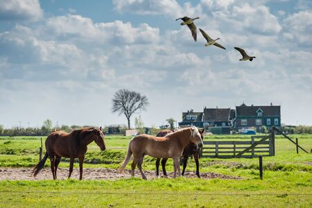 hurrying: Beautiful well-groomed horses in paddock, selective focus Stock Photo