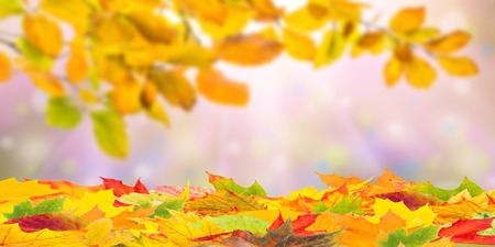 Fall background with orange foliage, seasonal autumn backdrop Stock Photo