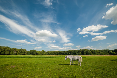 Summer landscape with grizzle horse on meadow, beautiful sky