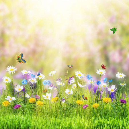 Beautiful spring floral meadow with wild flowers and butterfly