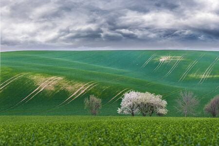 Cloudy landscape with blooming trees on a green field, approaching thunderstorm Stock Photo