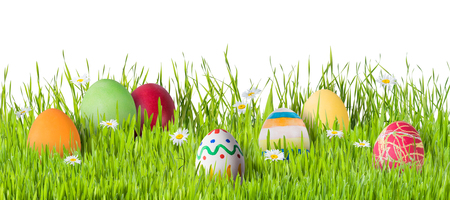 Easter eggs in grass with flowers isoleted on white background, for your design
