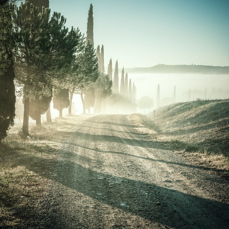 vintage landscape: Vintage landscape with cypress and road in foggy valley, Tuscany, lomography style Stock Photo