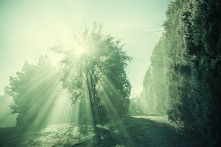 Vintage tuscany landscape, sun rays through the tree in foggy morning