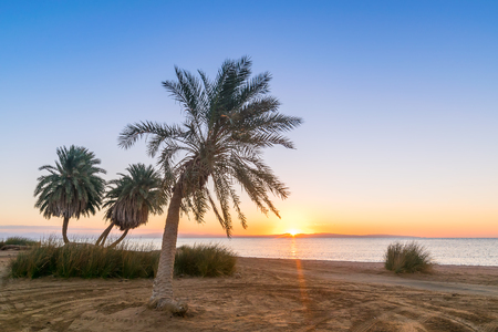 Beautiful summer landscape with palms on beach, Red Sea, South Sinai, Dahab Stock Photo
