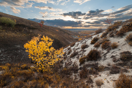 Yellow autumn tree on hill, landscape with majestic sky Stock Photo