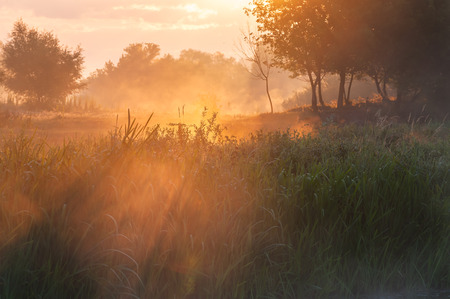 Summer landscape with misty morning, sunrise and fog on meadow