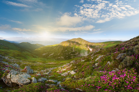 Majestic sunrise in mountains, summer landscape with rhododendron flowers and beautiful sky