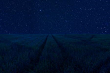 Night landscape with many stars in sky, green meadow