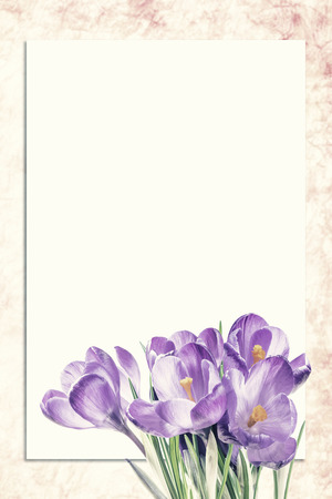 Sheet of paper and crocus flowers with places for your text. Vintage stylization, retro film filter