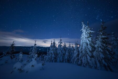 Night winter landscape with snowy forest and bright stars in sky