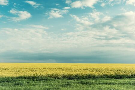Spring agricultural landscape with big rape fields and clouds in blue sky, farmland. Retro stylization, vintage film filter