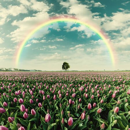 Beautiful spring landscape with big tulip field and rainbow, lonely tree on horizon. Retro stylization, vintage film filter Фото со стока