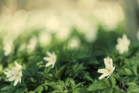 Beautiful spring flowers, nature floral soft background, selective focus. Retro stylization, vintage film filter