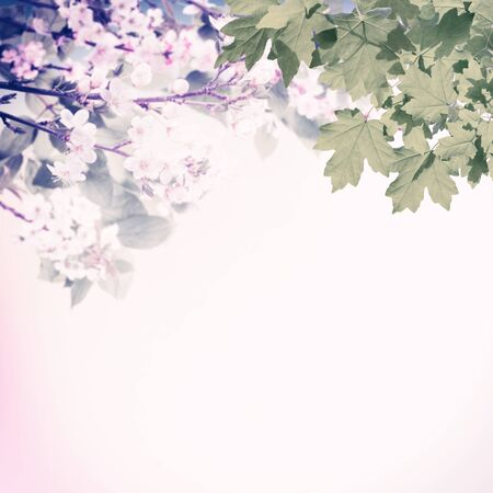 Spring background with blooming branches, wallpaper with flowers. Retro stylization, vintage film filter