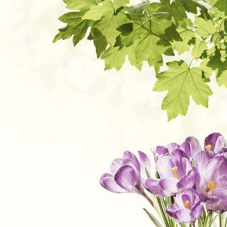 Green spring background with crocus flowers, nature floral wallpaper. Retro stylization, vintage film filter
