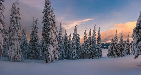 Winter panorama with forest in mountains on sunset, landscpe with white snow on fir trees