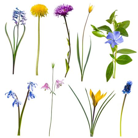 Beautiful spring different wild flowers isolated on white background, for nature creative design Фото со стока