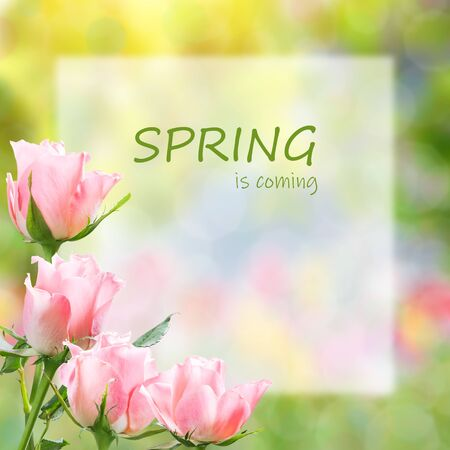 Colorful spring background with rose flowers and hello spring lettering Фото со стока