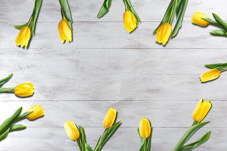 Spring nature background with yellow tulip flowers. Holiday and seasonal design, copy space