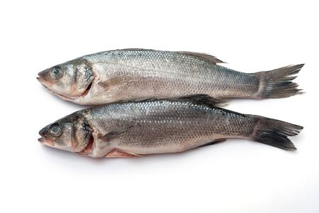 Fresh seabass fishes isolated on white background. Prepared to cooking, fresh sea food Фото со стока