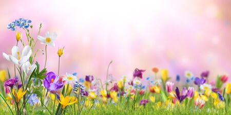 Nature background with wild flowers in green grass on meadow; selective focus. Spring wallpaper for greetings card design Stockfoto