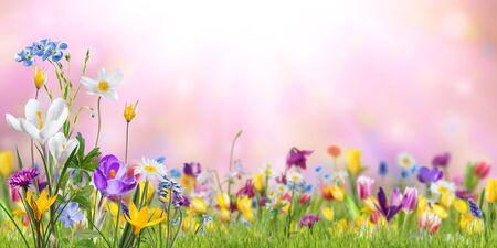 Fond de nature avec des fleurs sauvages dans l'herbe verte sur le pré ; mise au point sélective. Fond d'écran de printemps pour la conception de cartes de voeux Banque d'images
