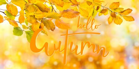 Nature autumn background with golden foliage