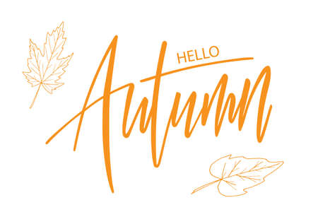 Hello Autumn brush hand lettering text isolated for greeting card or banner. Modern calligraphy slogan, vector