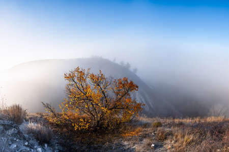 Lonely fall tree on autumn landscape with fog over hills