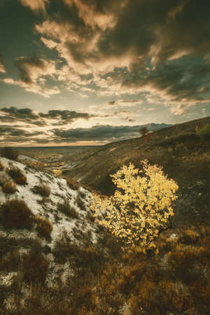 Bright yellow autumn tree on hill, fall landscape with majestic sky. Vintage stylization, retro film filter