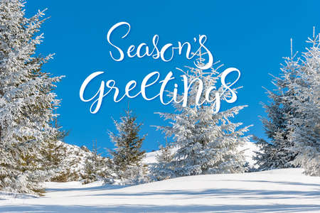 Beautiful landscape with winter forest and snow-covered trees, Christmas sunny day. Hand lettering text Seasons greetings