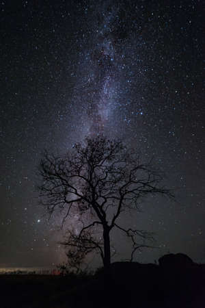Night landscape with lonely tree and Milky way in sky