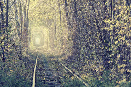Autumn landscape with railway in woodland, tunnel of trees in fall forest. Vintage stylization, retro film filter Фото со стока